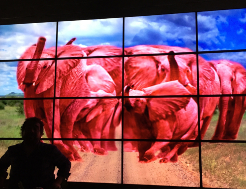 Trade Show Video Wall